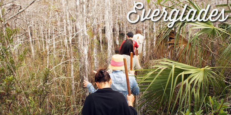 Un tour dans les Everglades