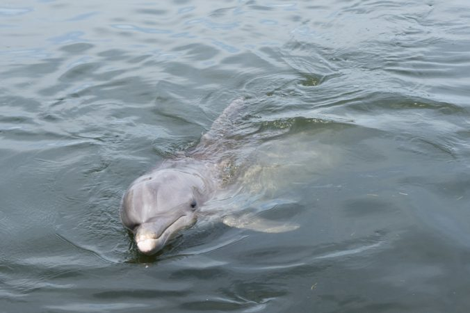 Dauphins Floride
