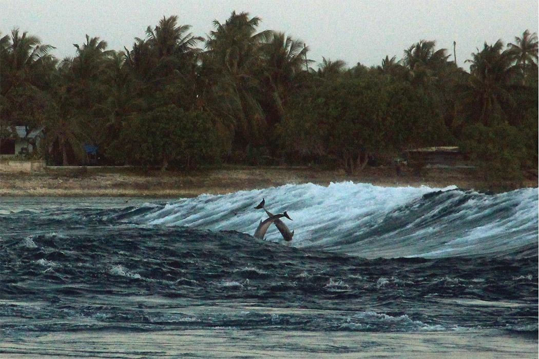 dauphins en liberté -