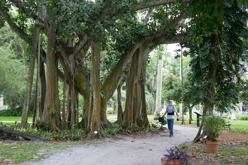 Jardin des maisons d'hiver de Ford et Edison - Fort Myers, Floride