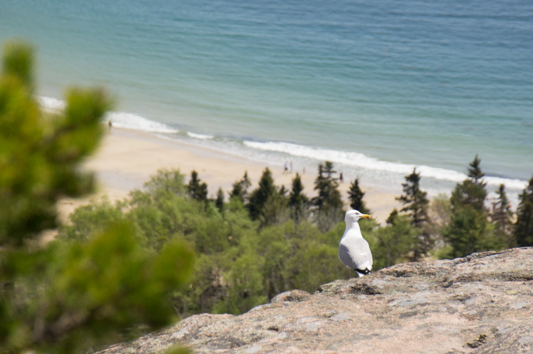 Beehive - Acadia National Park 4