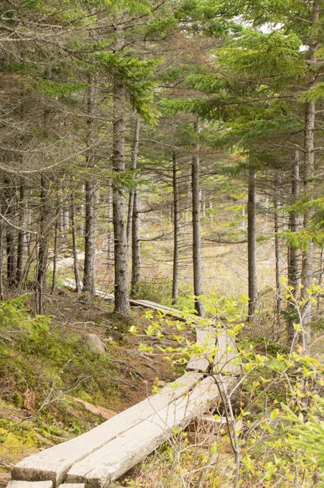 Chemin dans la forêt- Acadia National Park