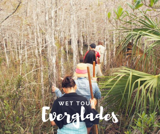 Wet Tour Everglades