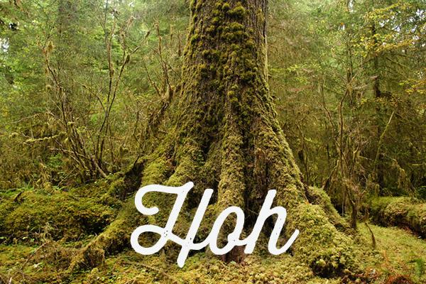 Hoh Rainforest - Olympic National Park - Washington
