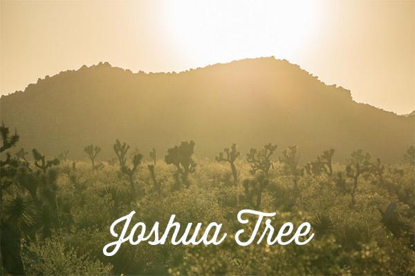 visiter joshua tree californie