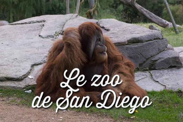le zoo de san diego en californie