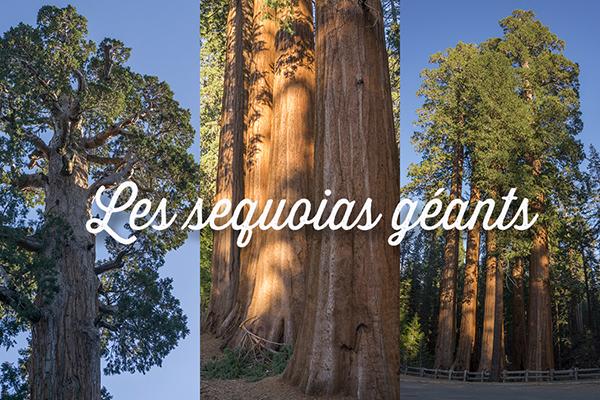 séquoias géants californie