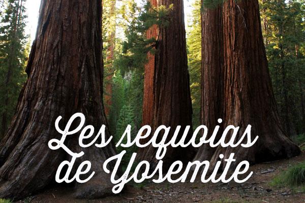 séquoias yosemite