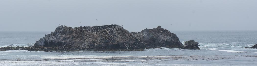 17 mile drive Monterey Carmel Californie colonie d'oiseaux
