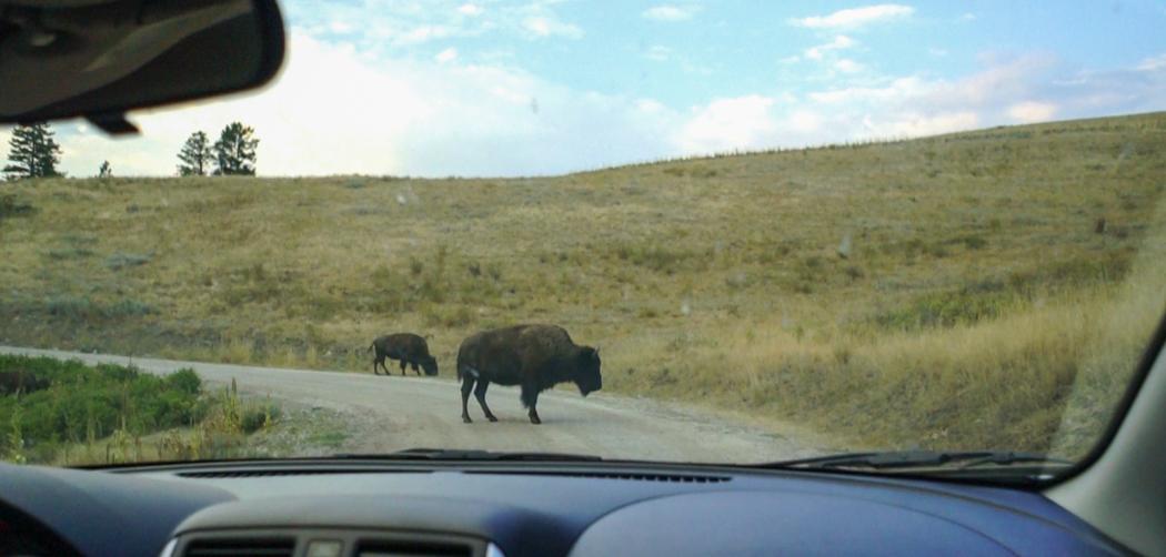 Montana - Bison Park