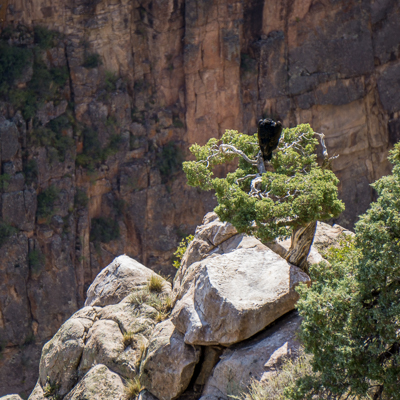 road trip sud ouest américain vautour dans son nid Colorado