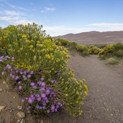great sand dunes colorado les fleurs
