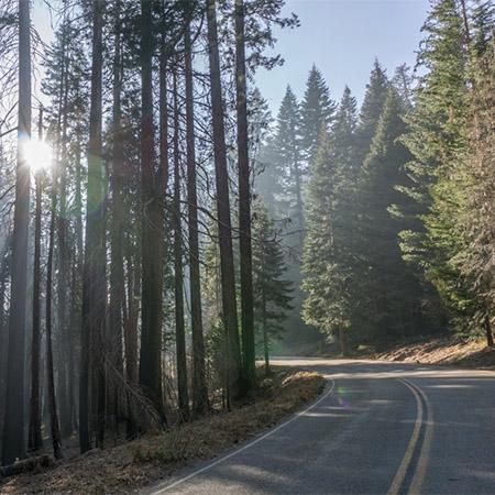 road trip sequoias