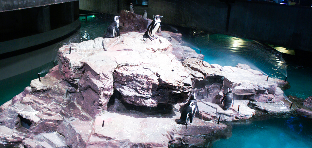 Les pingouins de l'aquarium de Boston