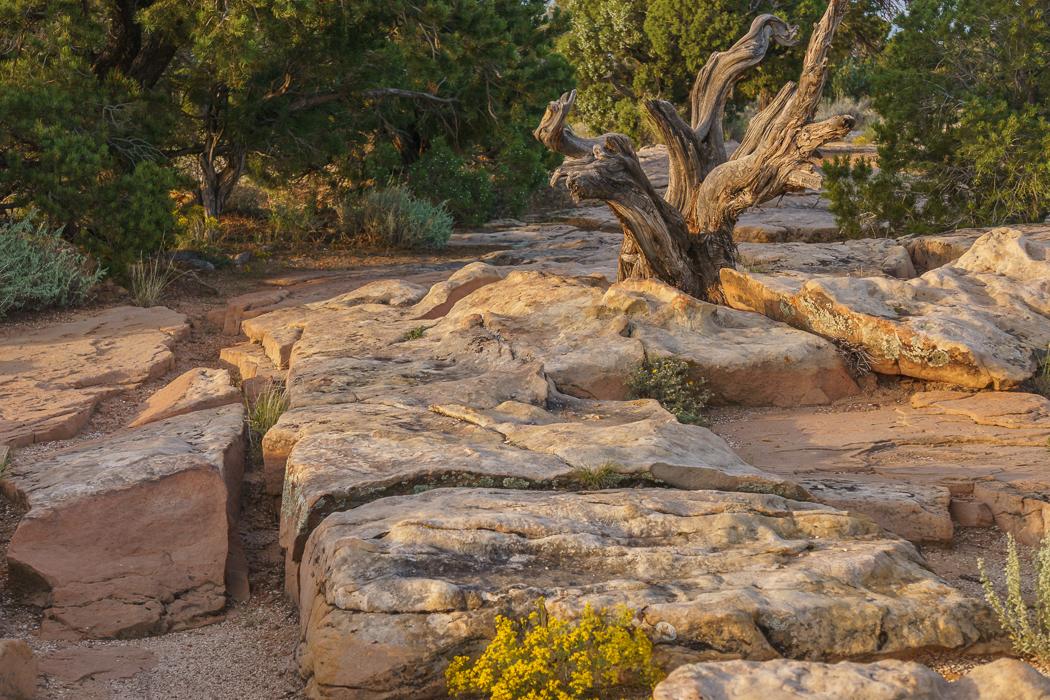 Colorado National Monument arbre