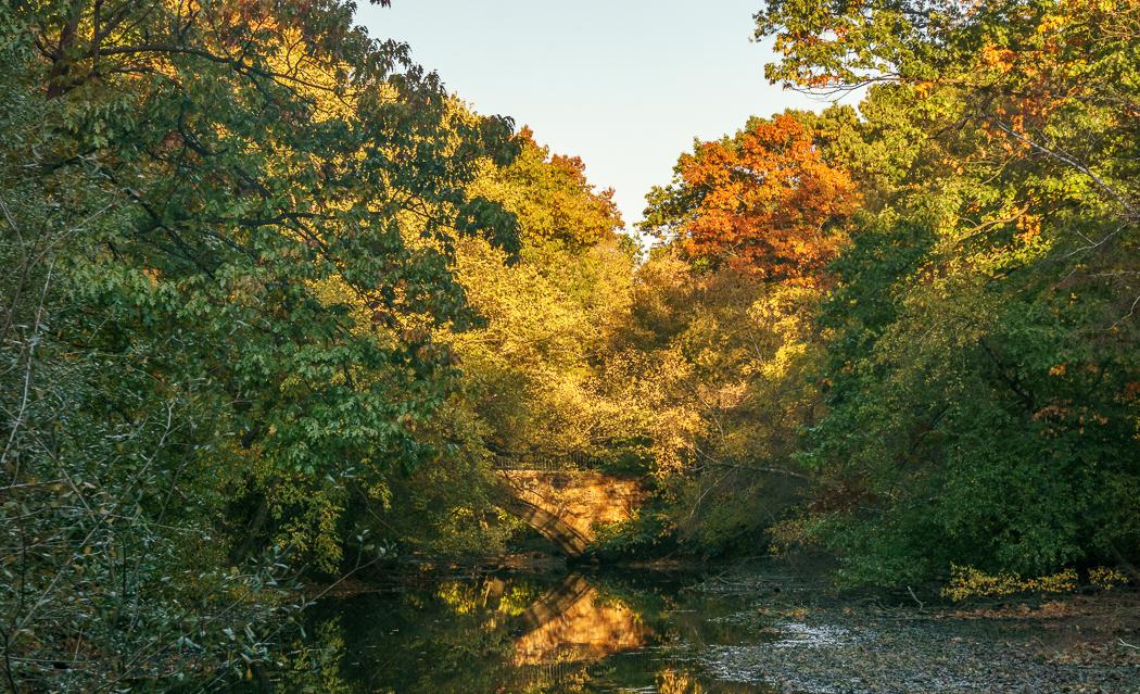 jamaica pond arboretum boston