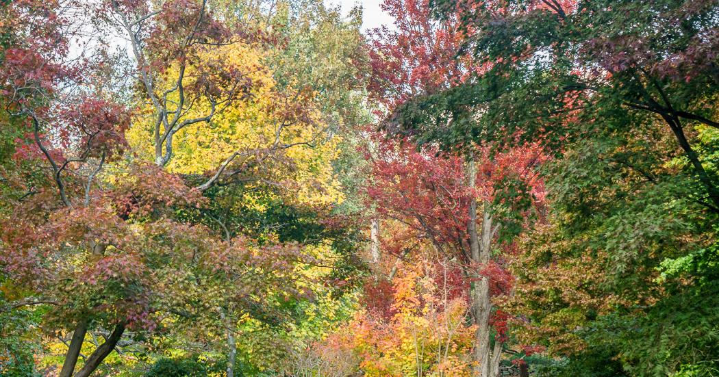 jamaica pond arboretum arbres