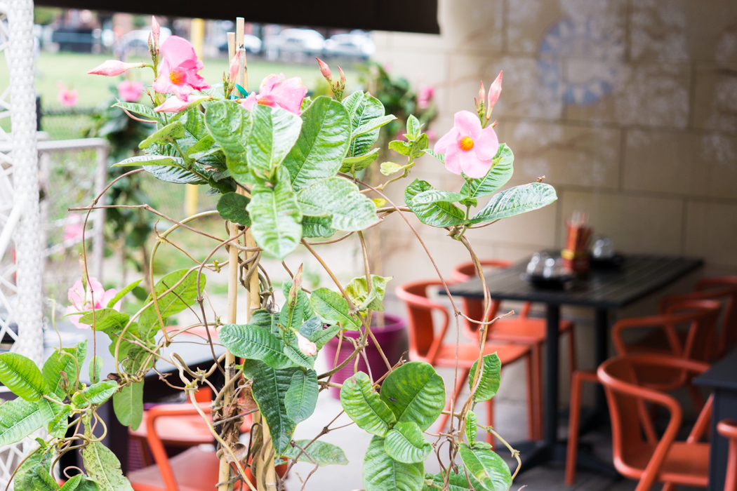 Myers and Chang restaurant Boston-1 fleurs