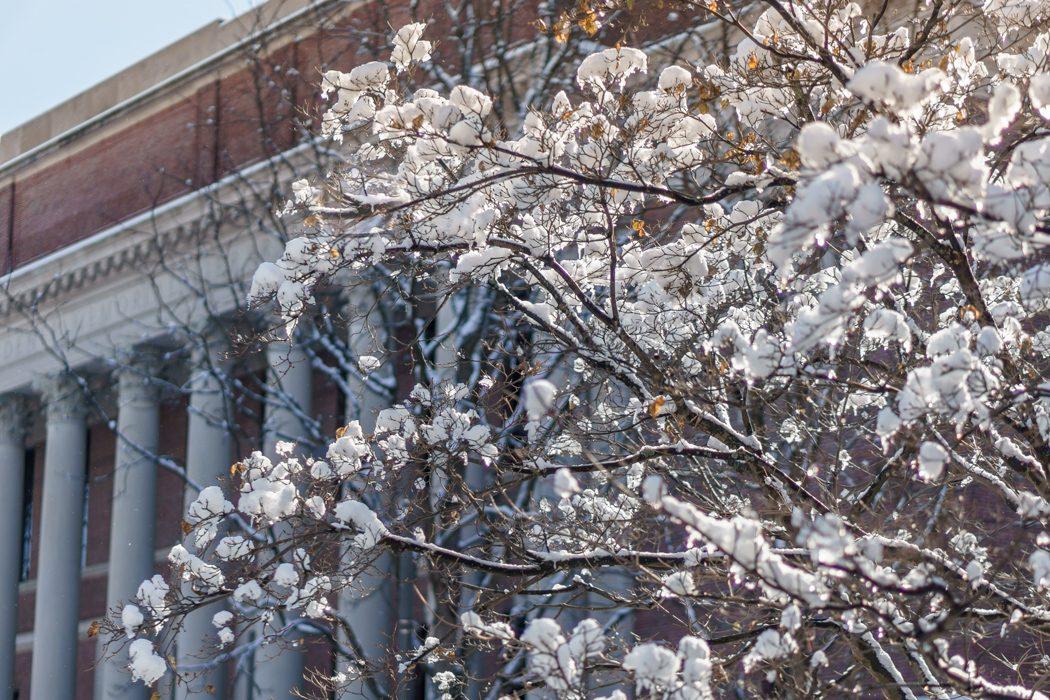 Harvard Art Museum - Harvard Yard