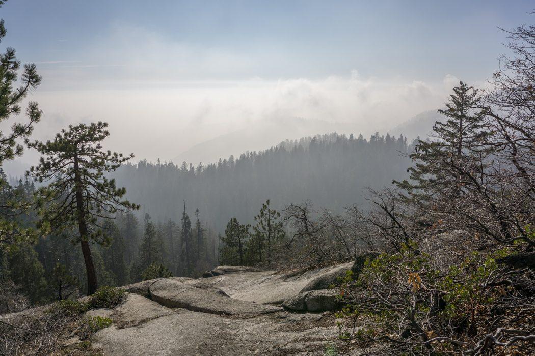 Sequoia national park californie lumière de fin d'après-midi