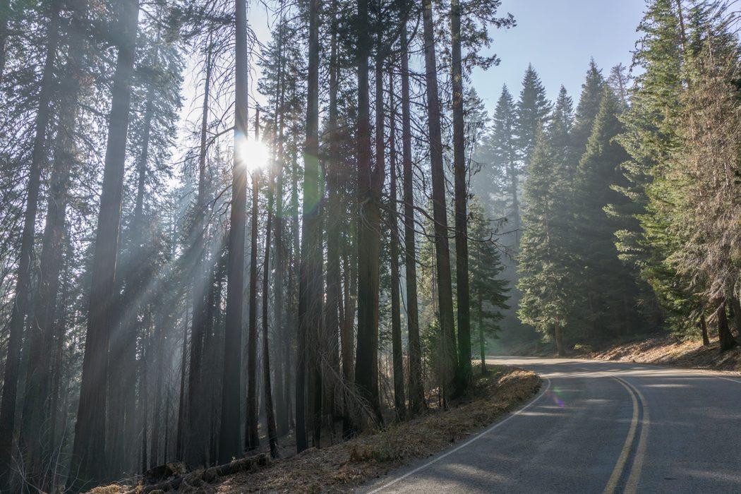 Sequoia national park californie - sur la route