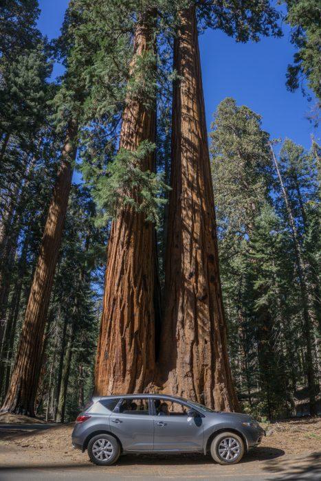 sequoia national park californie-4