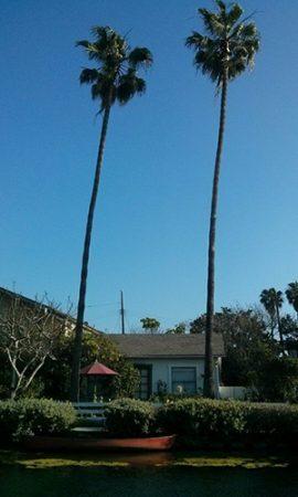 venice beach - Los Angeles - www.maathiildee.com