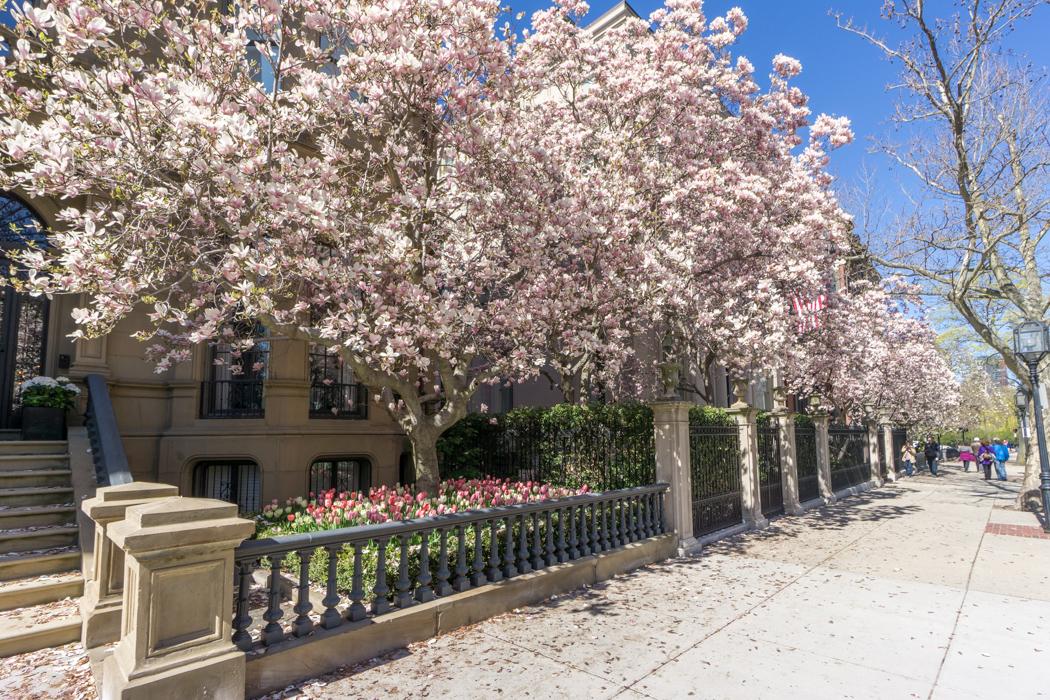 Printemps Boston magnolias // Le blog de Mathilde