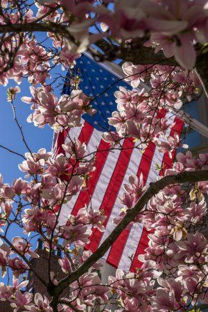 Printemps Boston floraison-14