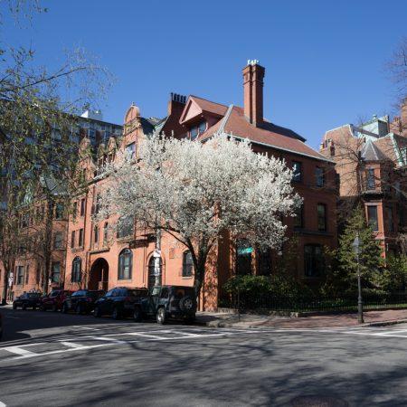 Printemps Boston floraison-17