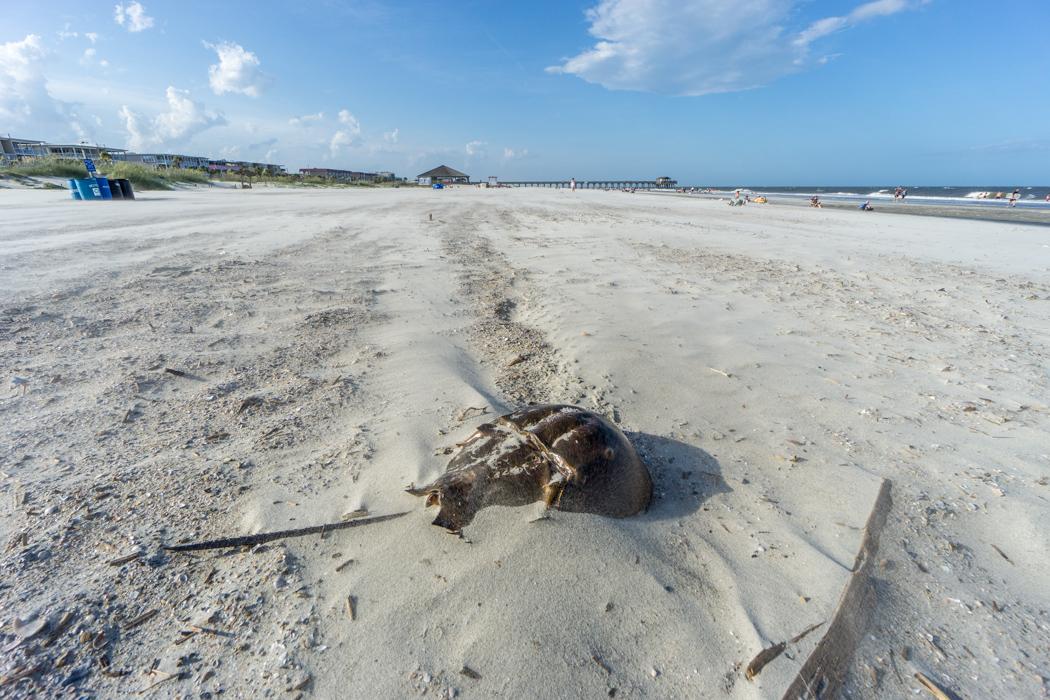 Tybee Island la plage Savannah-2