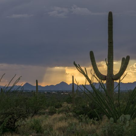 Arizona - Saguaro national park