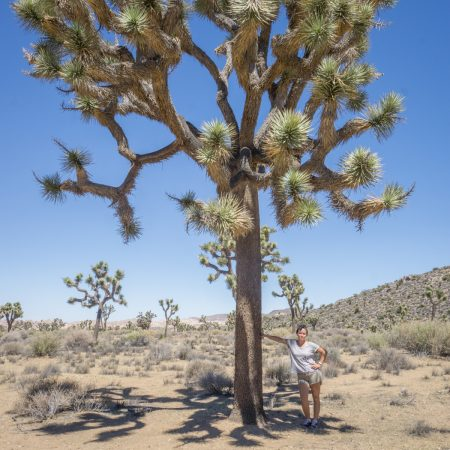 california - joshua tree