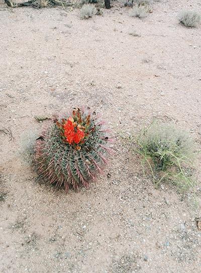 Cactus chaise de belle mère