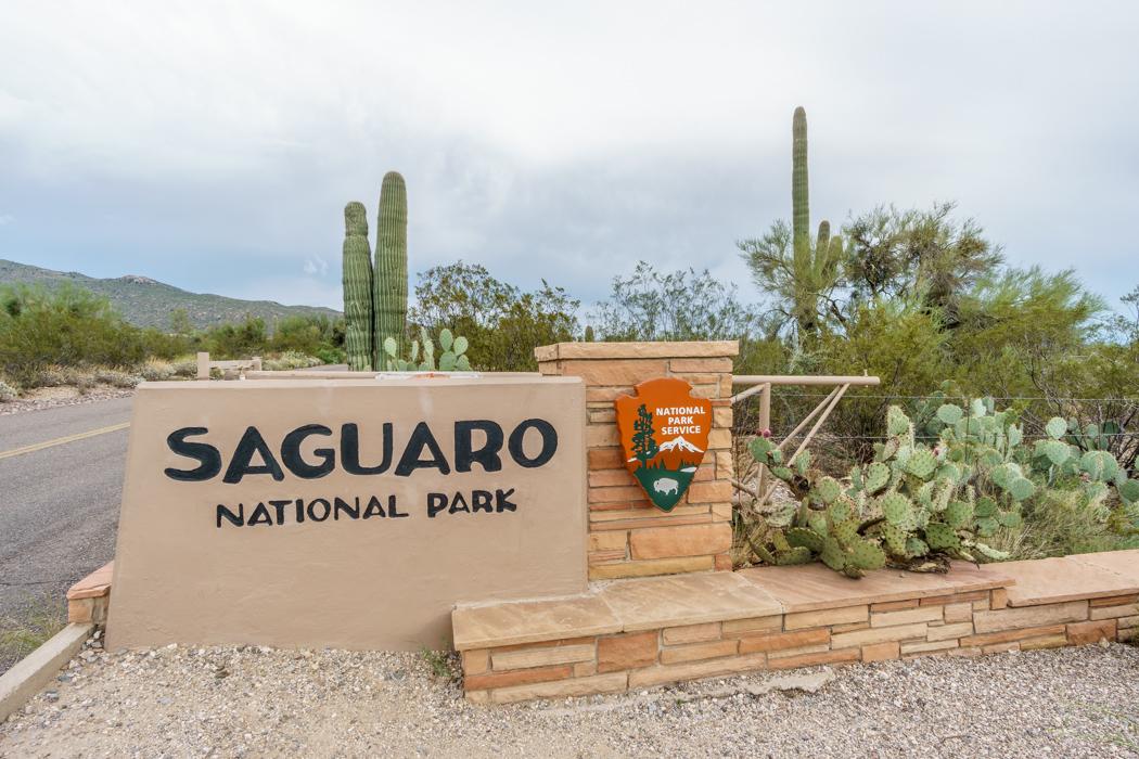 Saguaro Cactus Arizona-1