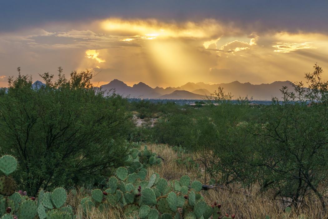 Saguaro Cactus Arizona-14