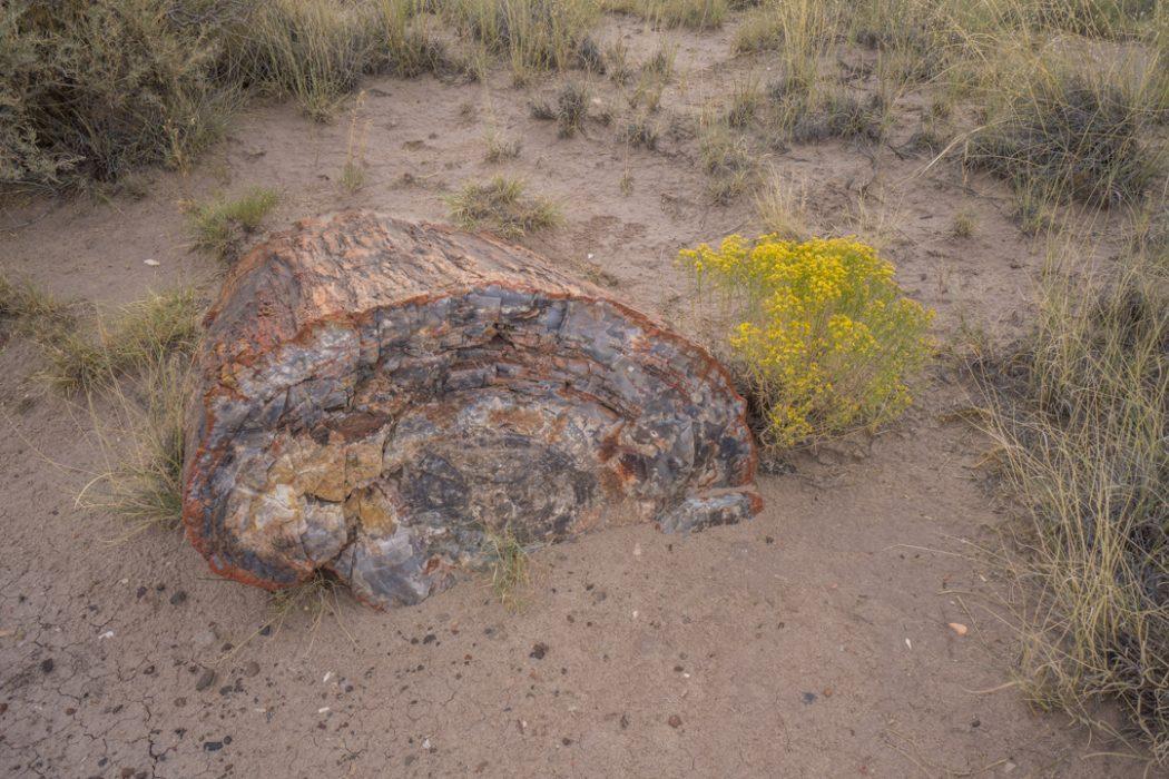 foret petrifiee arizona-11