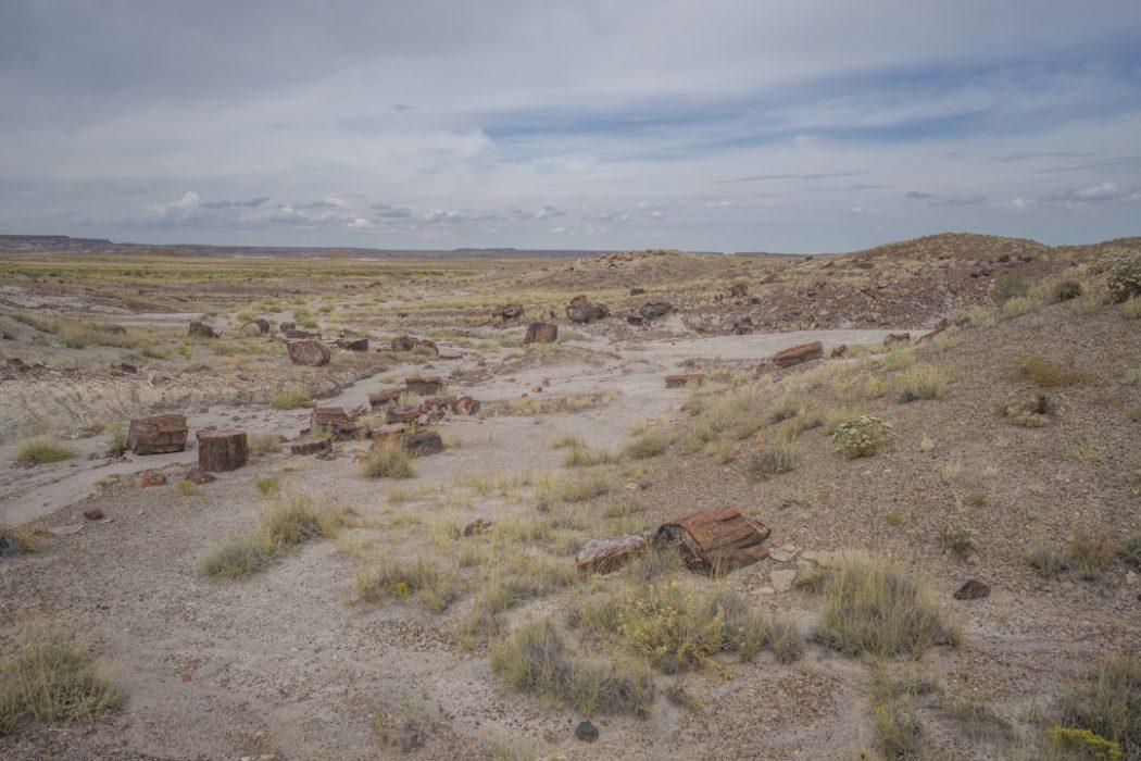 foret petrifiee arizona-12