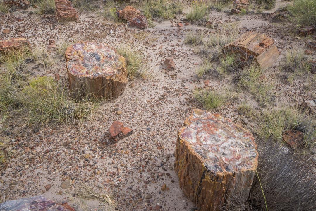 foret petrifiee arizona-4