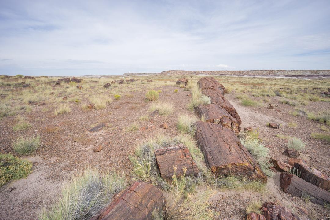 foret petrifiee arizona-7