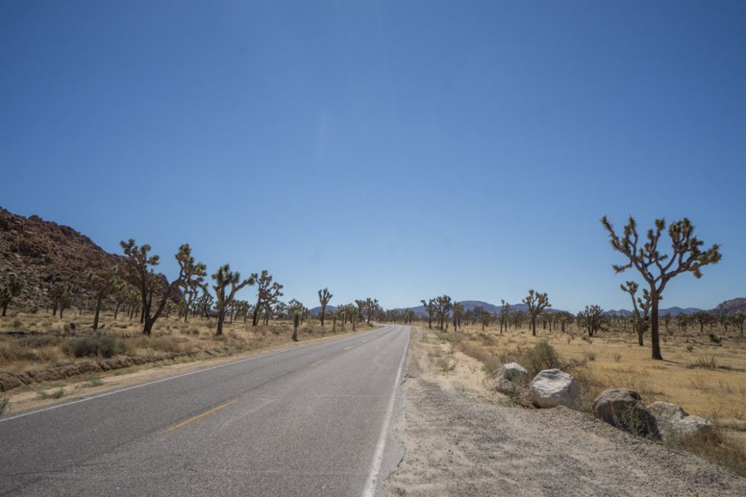 Joshua Tree Park California-2