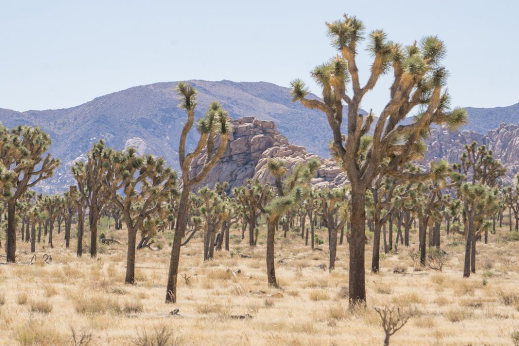 Joshua Tree Park California-3