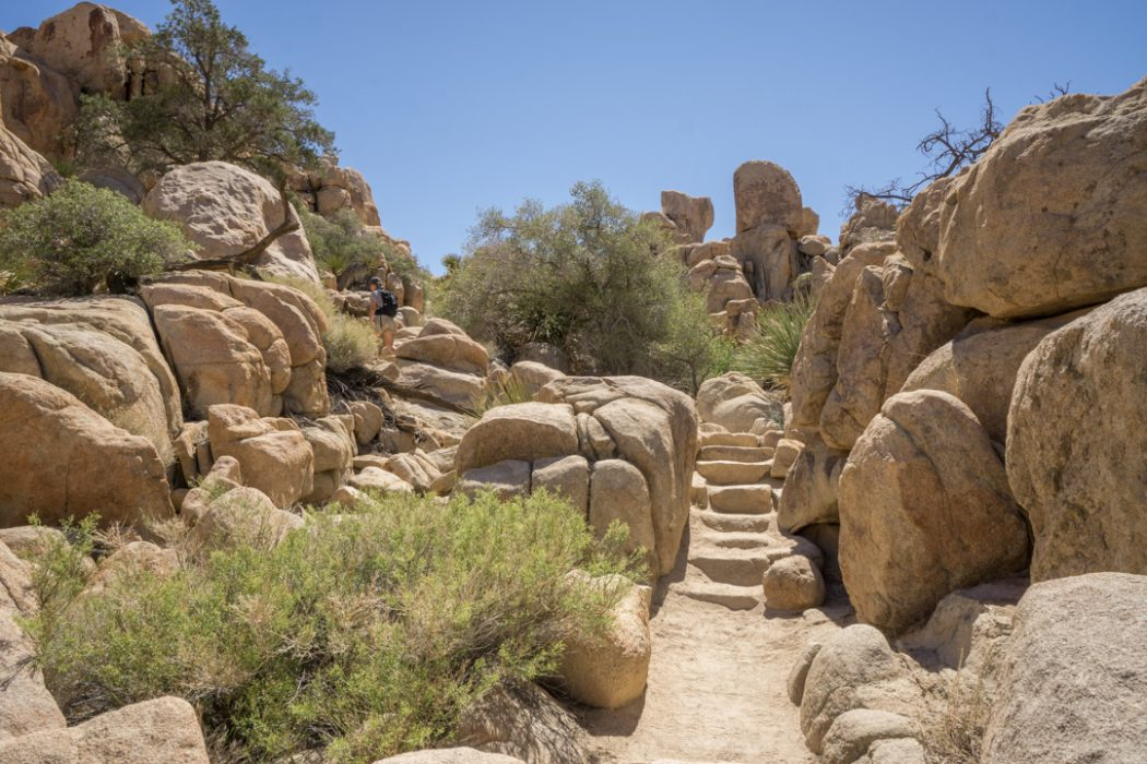 Joshua Tree Park California-5