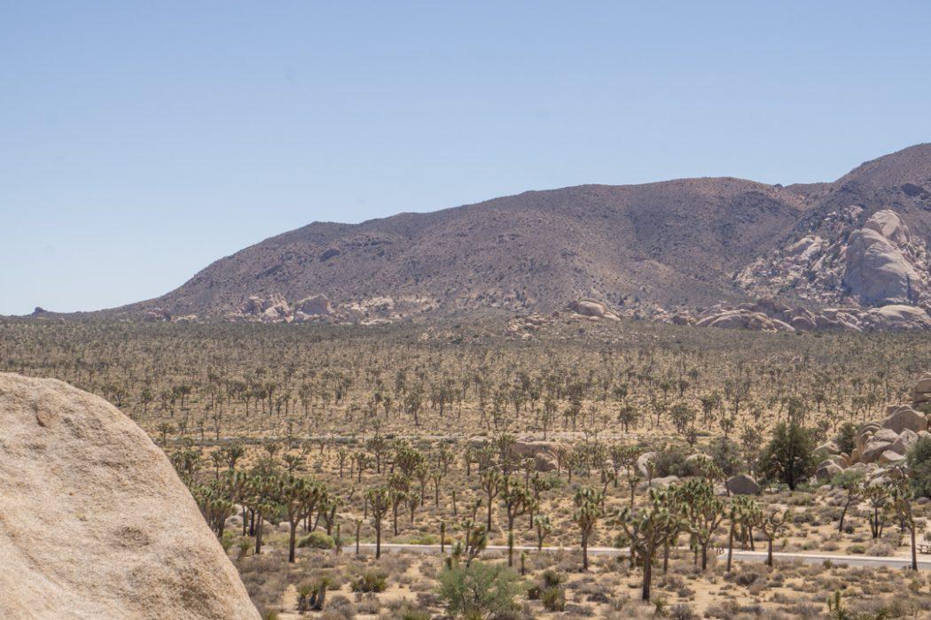 Joshua Tree Park California-6
