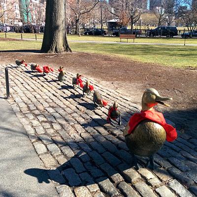 Les canards du Jardin Public Boston