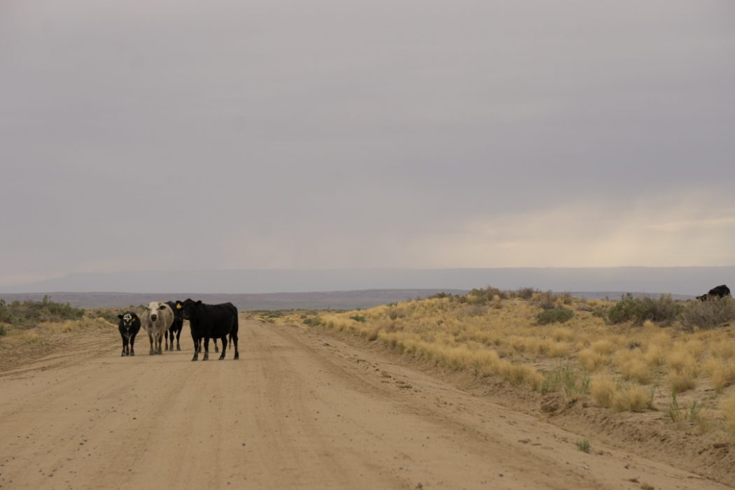 Bisti Badlands Nouveau Mexique-15
