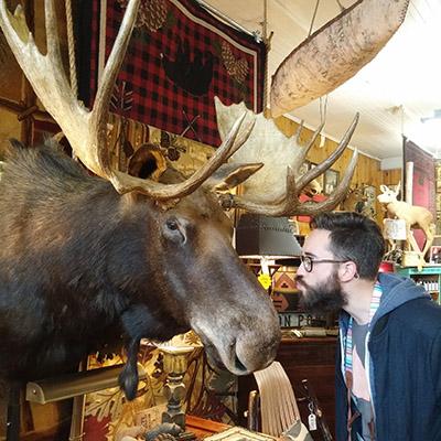 bisous moose