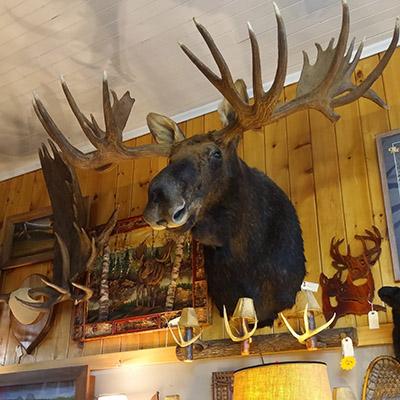 trophee moose