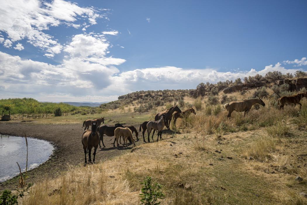 road-trip-oregon-chevaux-ranch-1