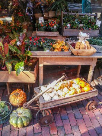 boston pumpkin